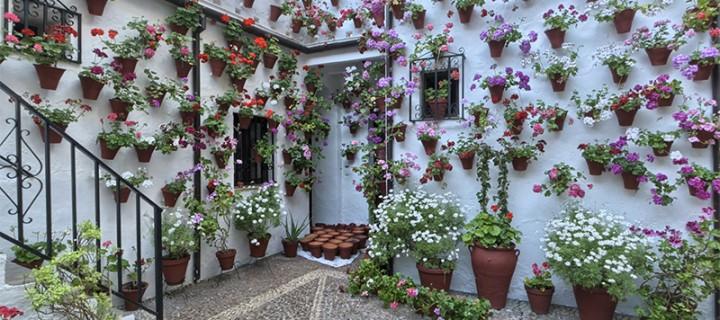Casa-Patio de la calle Martín de Roa, 9